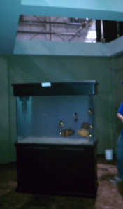 TVShowFreshwaterTank